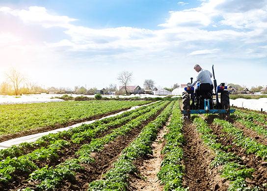 Farmer tending to crop.