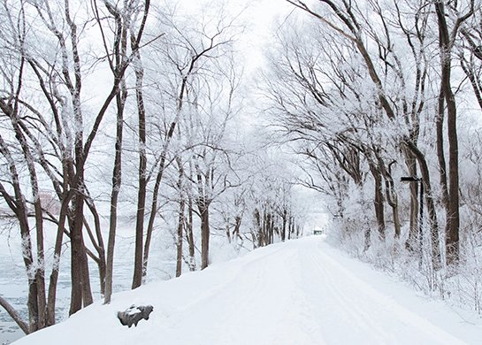 Snowy_Season.jpeg Featured Image
